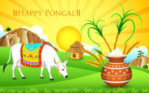 Happy Pongal 2017 Images, Pictures, Photos, Pics, Wallpapers