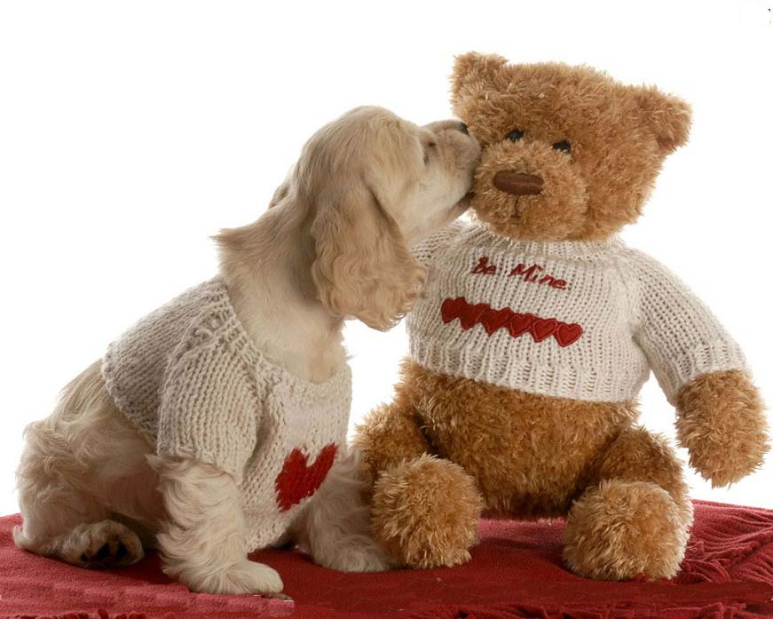 Happy Teddy Day 2019 Images, SMS, Quotes, HD Wallpapers, Greetings, Messages, Whatsapp Status, Pictures, Photos, Pics