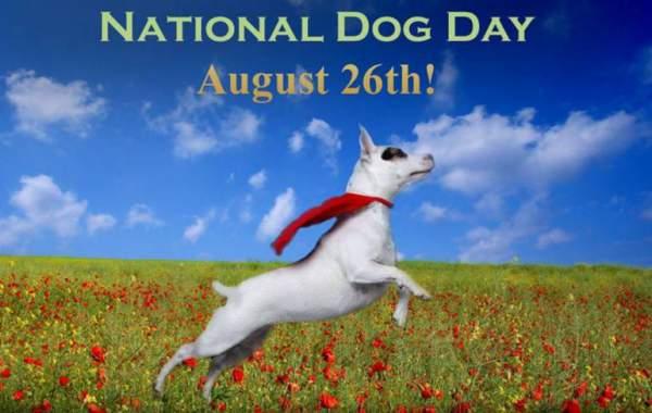 happy national dog day 2018, international dog day, national dog day quotes, national dog day images, dog quotes, national dog day instagram captions