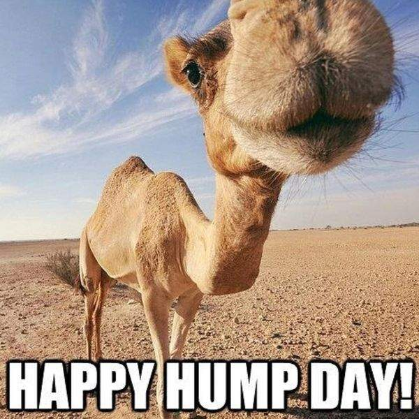 Happy Hump Day Meme Quotes Images